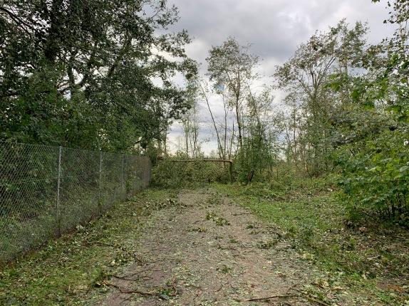 Von Bäumen versperrte Zufahrt