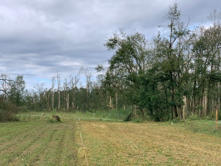 Die Bäume hinter dem Bogenplatz bestehen nur noch aus Stümpfen.