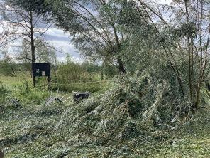 Die umgestürzten Weiden